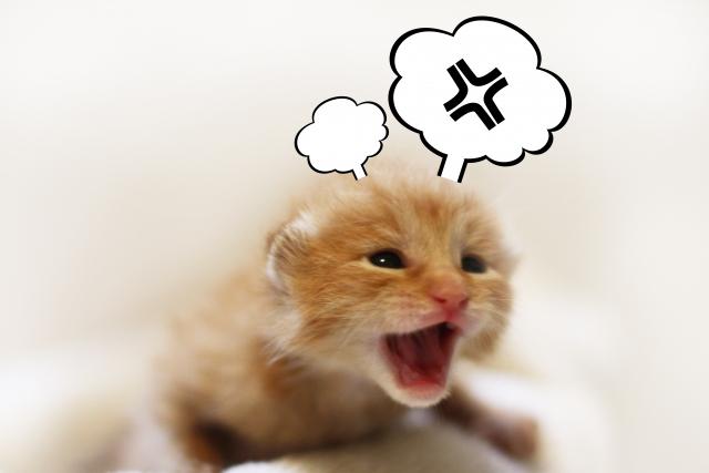 子猫ふきだしイライラ