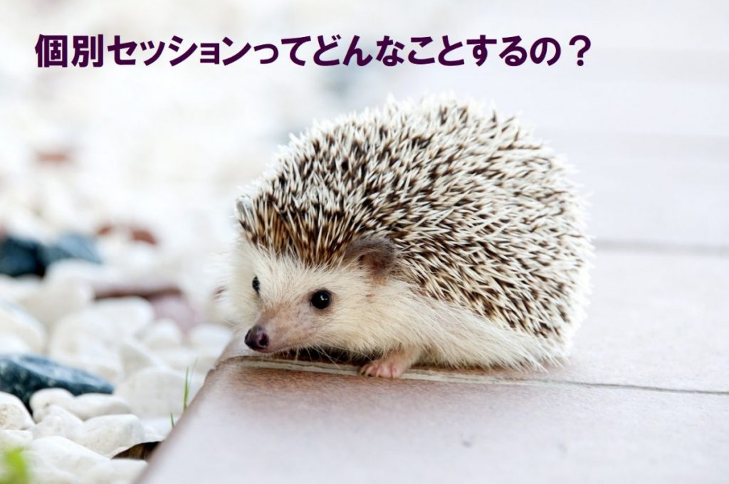 hedgehog-animal-baby-cute1