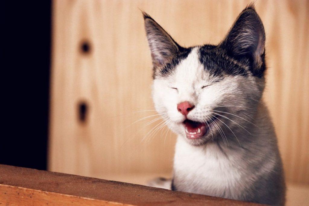 sleepy-cat-funny