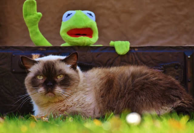 frog-and-cat