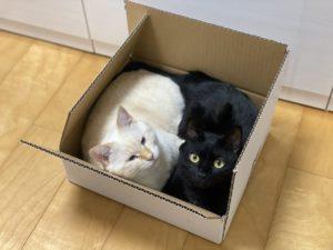 猫みーちゃん&きんちゃん