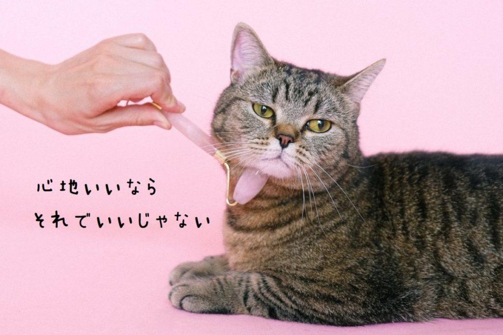 cat-face-roller1